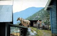Køyring med hest i Øvste...